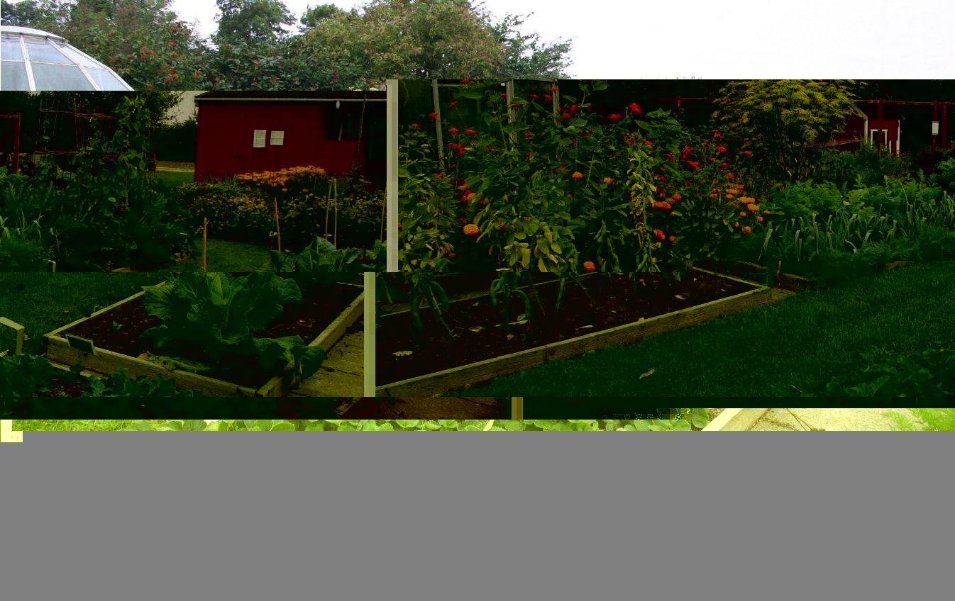 Огородныеы с фото